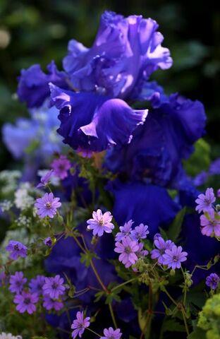 Ce rêve bleu