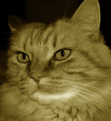 chat automne 2 sepia