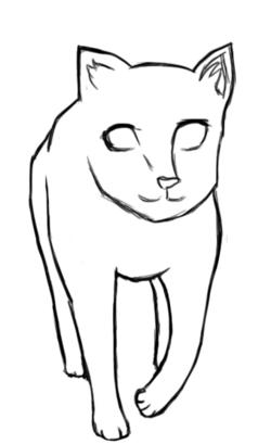 Début  de chat
