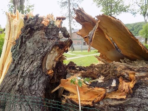 Il est mort mon bel arbre...