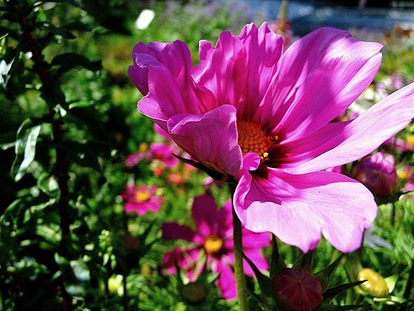 jardin-des-plantes-037.JPG