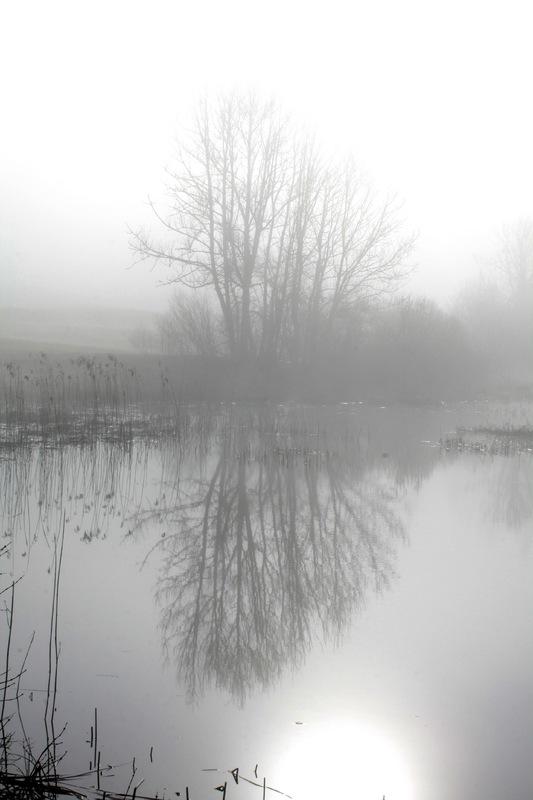 "Balade ""d'avant"" au bord du lac : brume - 17"
