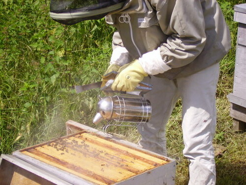 The equipment of a beekeeper and the harvest periods