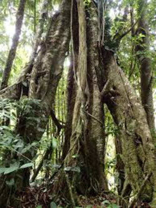 FUTUR PROCHE n° 11 : Dérik et la Forêt Vierge