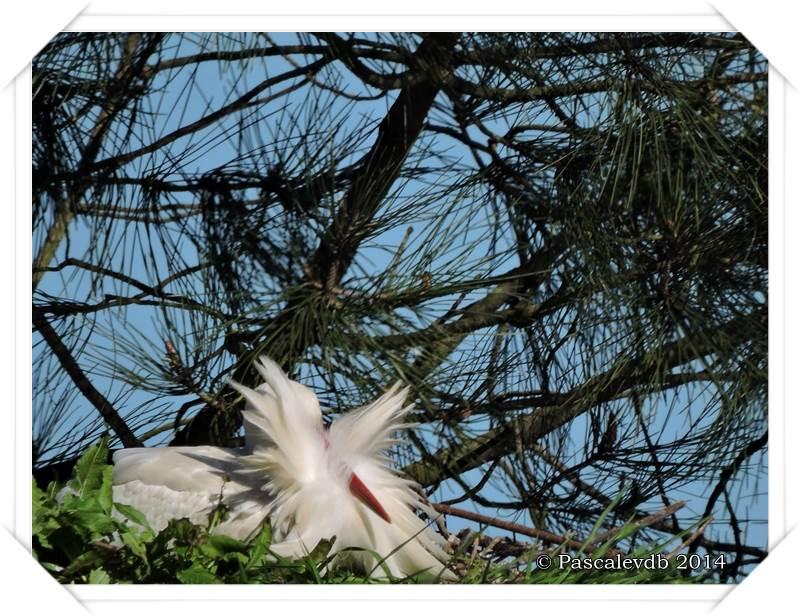 Réserve ornithologique du Teich - 1/9