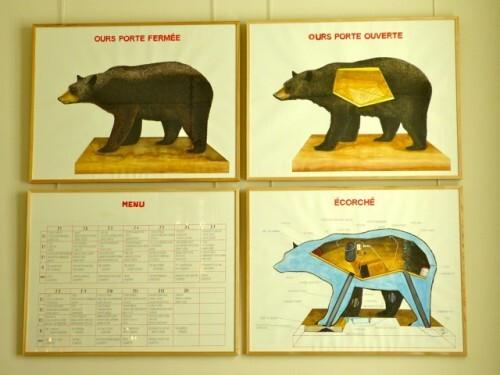 Dans la peau de l'ours Poincheval 4 dessins