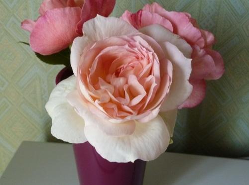 Mon jardin en mai - les rosiers.