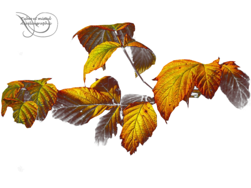 Jolies feuilles d'automne