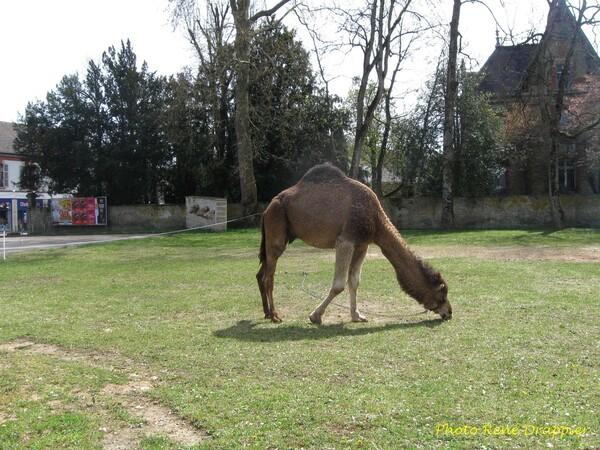 Un cirque à Châtillon...