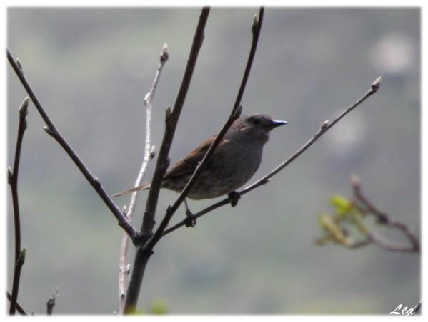 P5209122 oiseau