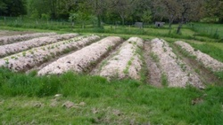 Permaculture 2013