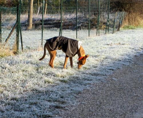 Pods en hiver