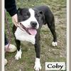 Coby 1