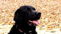 """Résultat de recherche d'images pour """"bbc dave the dog"""""""
