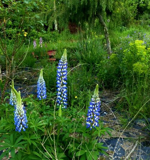 enfin l'été 2017 au jardin .