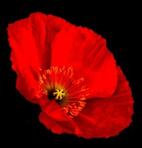 rst4v0cm-coquelicot.jpg
