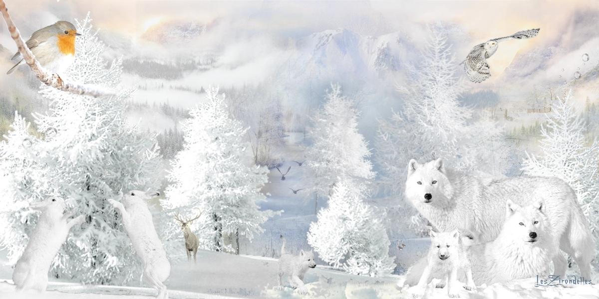 Fonds d'hiver blanc, loups