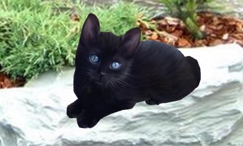 Titus mon premier chat noir