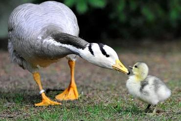 Mère Nature est parfois hostile ...
