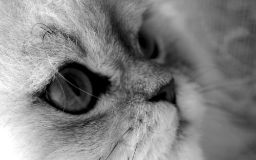 Belles images de félins en noir et blanc.