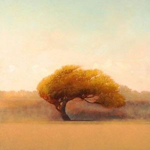 L'arbre et le vent ...