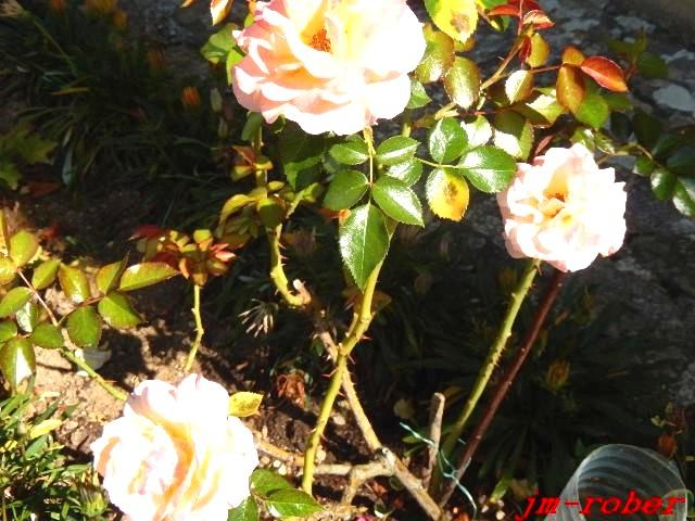 Bientôt la fin de l'été , un petit tour au jardin avant l'averse