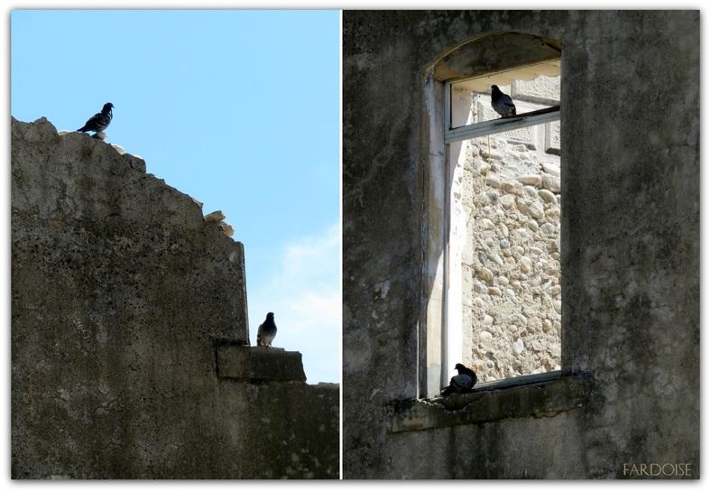 Histoires de pigeons...