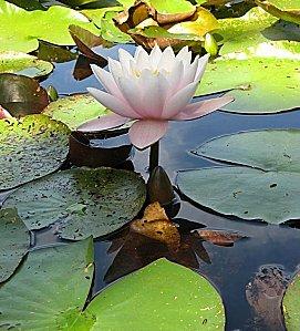 Jardin-du-Prahor-8-08-12-IMG_0417.JPG