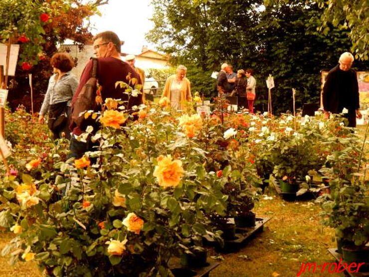 Saint Yrieix sous Aixe 87: la 16ème Fête de la Rose au coeur de ce petit bourg plein de charme