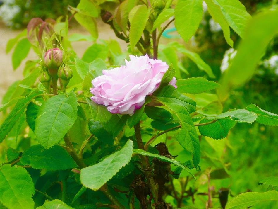 Toujours les fleurs du jardin!