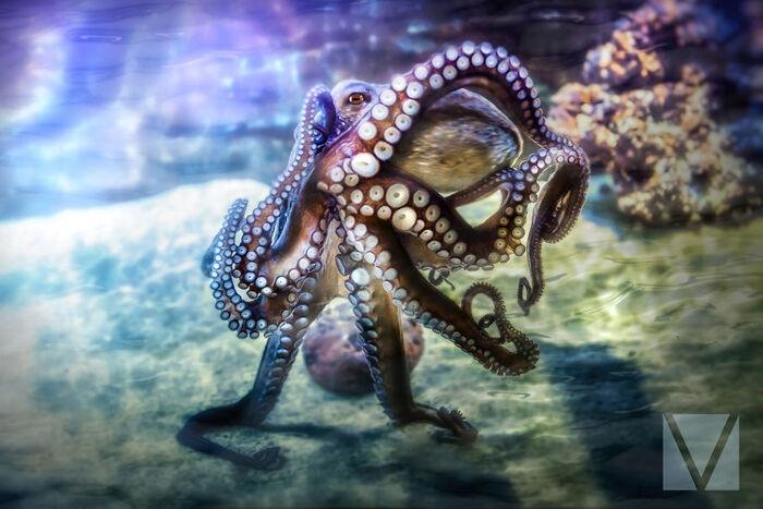'Octoprancer' - Lorsque The Octopus localise votre appareil photo et commence à se débarrasser de certaines formes