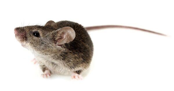 Des souris ont pu recouvrer la vue grâce à des neurones qui repoussent. Pourra-t-on faire la même chose chez l'Homme ? © Kuttelvaserova Stuchelova, Shutterstock