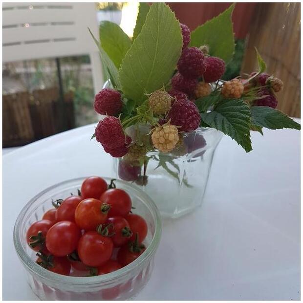 -Mildéfis n° 232 fruit rouge