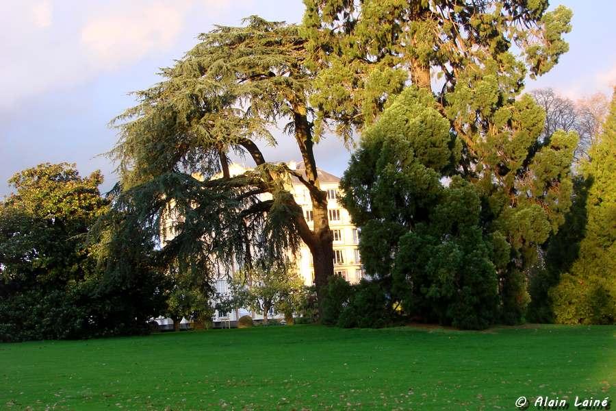 Soleil au jardin du Thabor - Rennes (1/2)