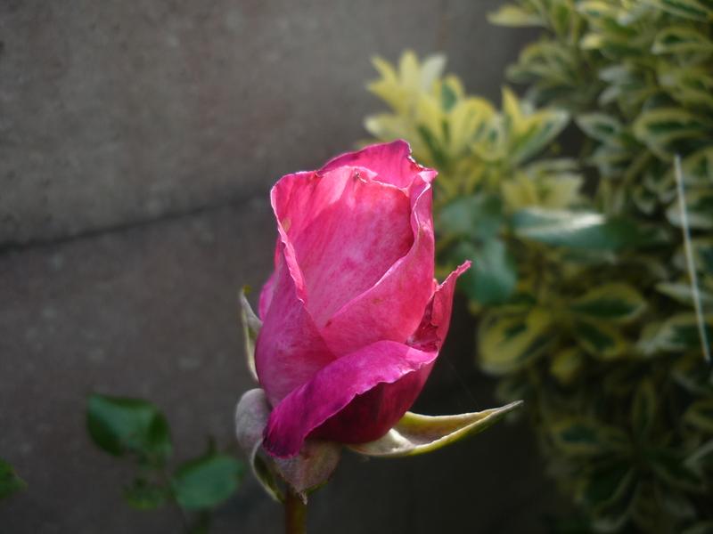 Mes fleurs d'Eté.