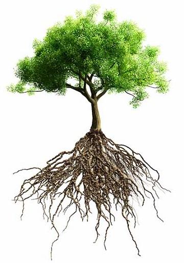 """Les arbres ces """"êtres"""" mystérieux ..."""