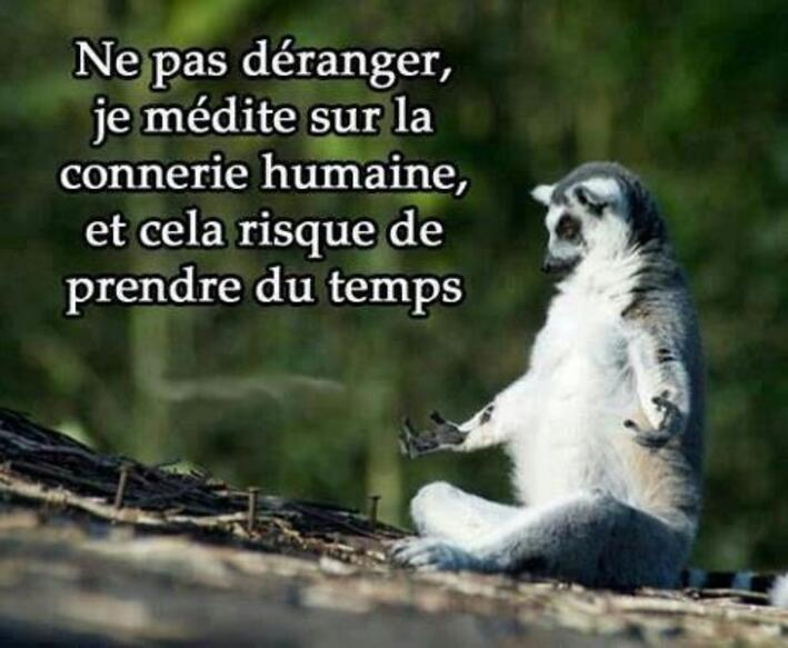 PETIT AMUSEMENT EN CITATION.....