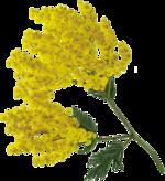 Tube virág 2