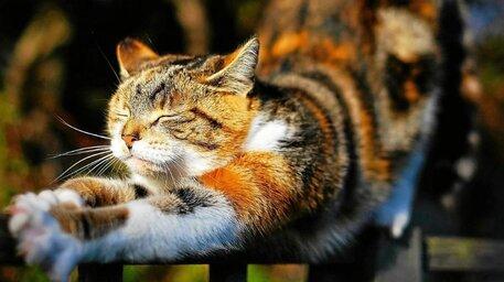 Insolite. Cinq chats ayant (beaucoup) plus d'abonnés que vous sur ...