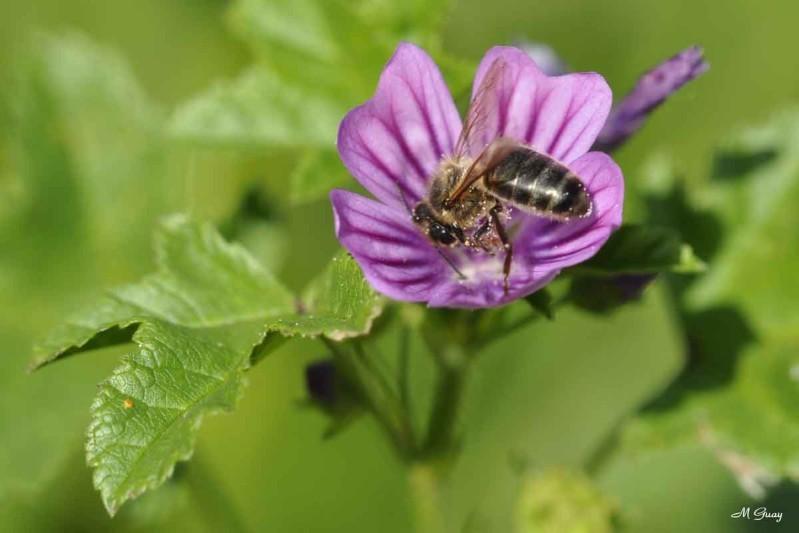 abeille-repas-8428.jpg