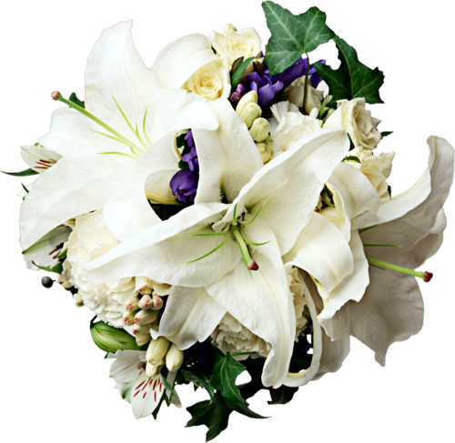 Free Vectors, Png Free Download Flowers : Bouquet of flowers White Lily