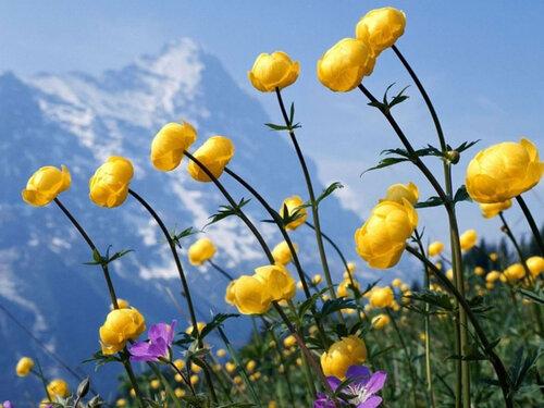 Photo de fleurs (1)