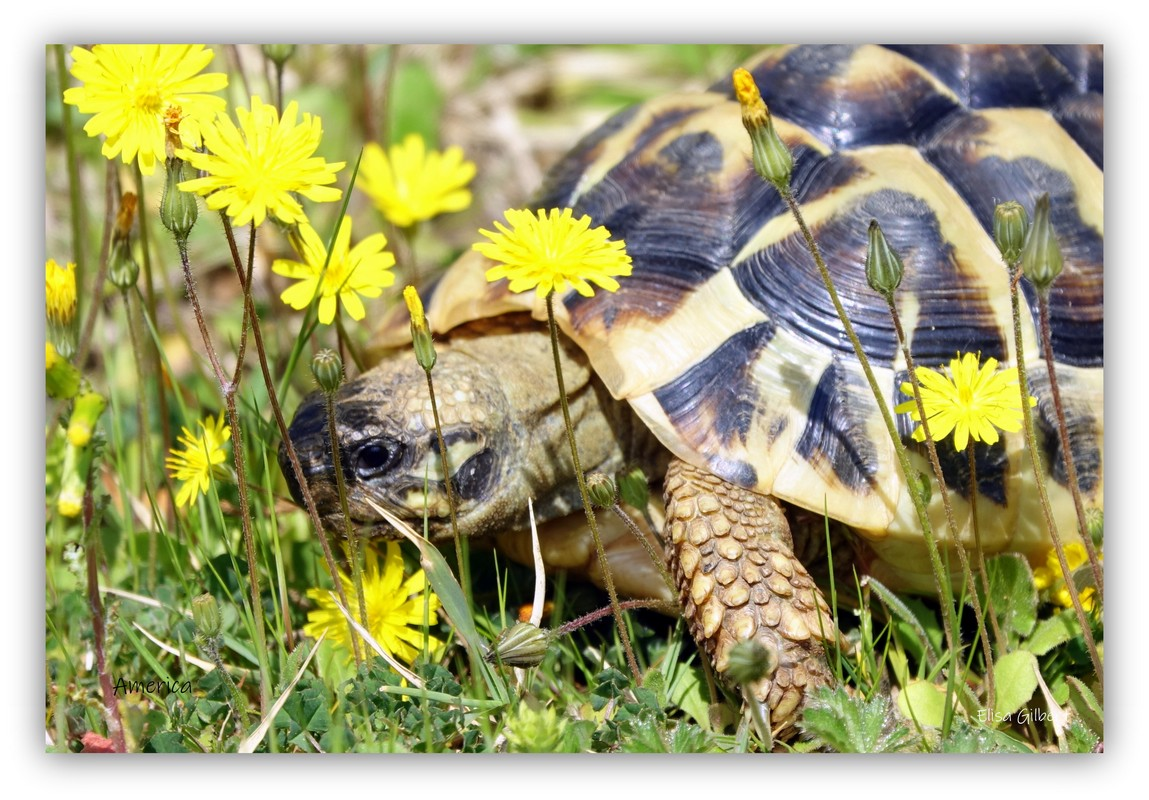 Le Printemps de mes tortues