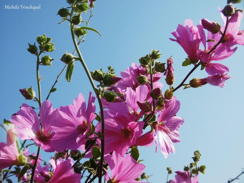 Les fleurs du samedi...