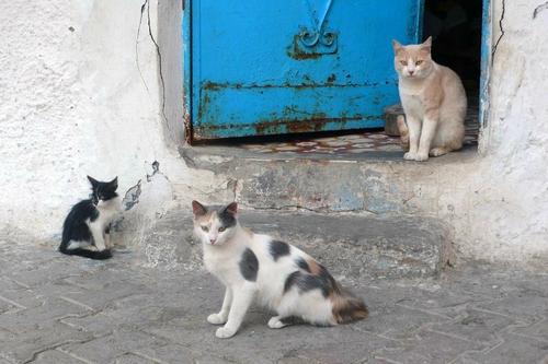 Des chats en couleurs