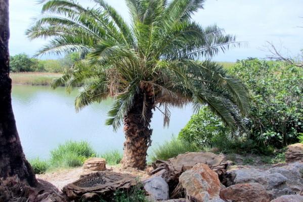 hx10 - Le palmier