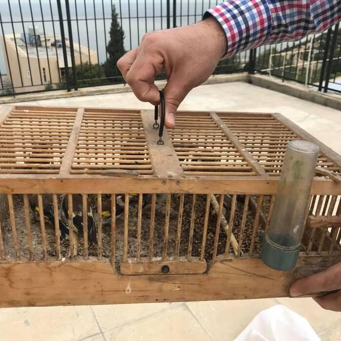 Ouvrez la cage aux oiseaux !