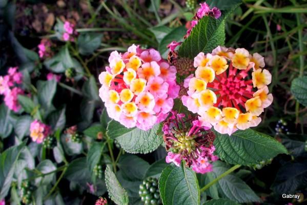 x03---Multicolore.JPG