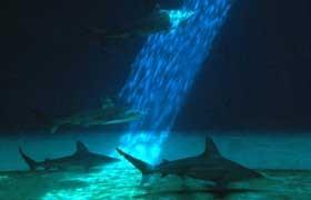 20021023172213-vasca-squali.jpg