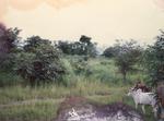 Savane africaine